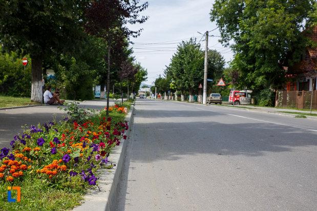 flori-plantate-in-orasul-breaza-judetul-prahova.jpg
