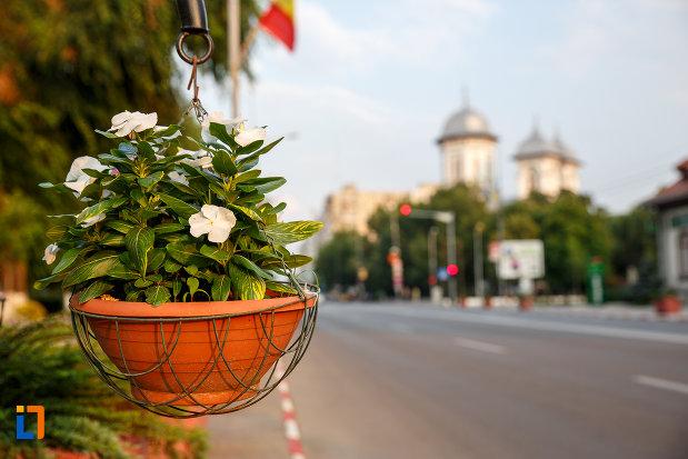 ghiveci-cu-flori-amplasat-in-orasul-alexandria-judetul-teleorman.jpg