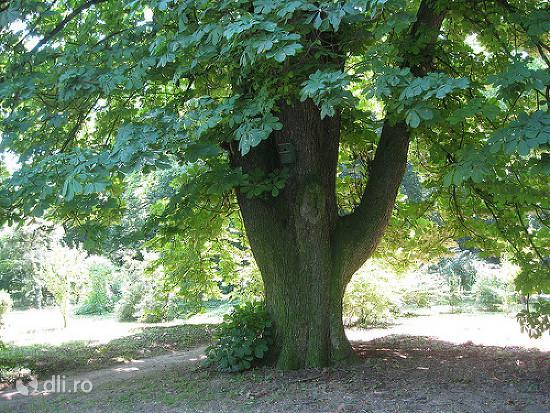 gradina-botanica-macea.jpg