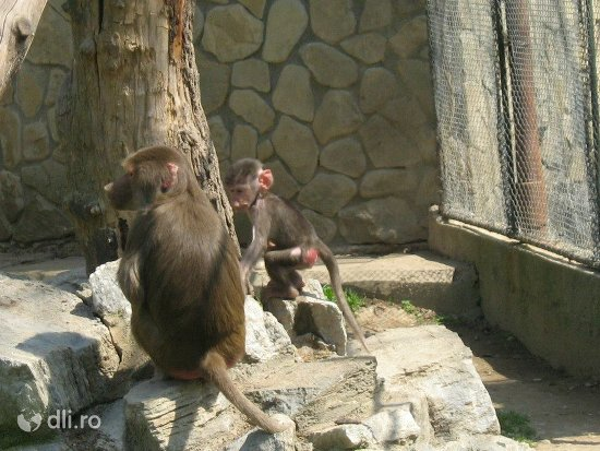 gradina-zoologica-din-targoviste.jpg