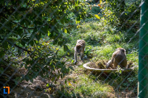 grup-de-maimute-din-gradina-zoologica-din-sibiu-judetul-sibiu.jpg