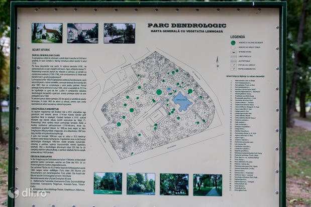 harta-parcului-parcul-dendrologic-carei.jpg