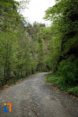in-drum-spre-cascada-lotrisor-judetul-valcea.jpg