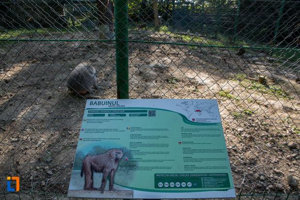 informatii-despre-babuin-gradina-zoologica-din-sibiu-judetul-sibiu.jpg