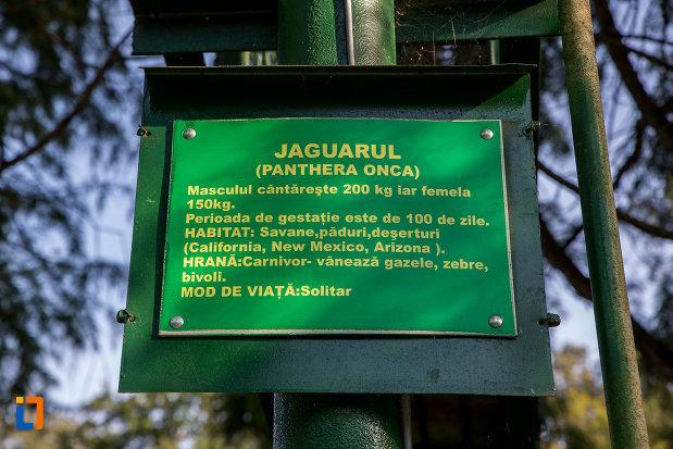 informatii-despre-jaguar-gradina-zoologica-din-sibiu-judetul-sibiu.jpg
