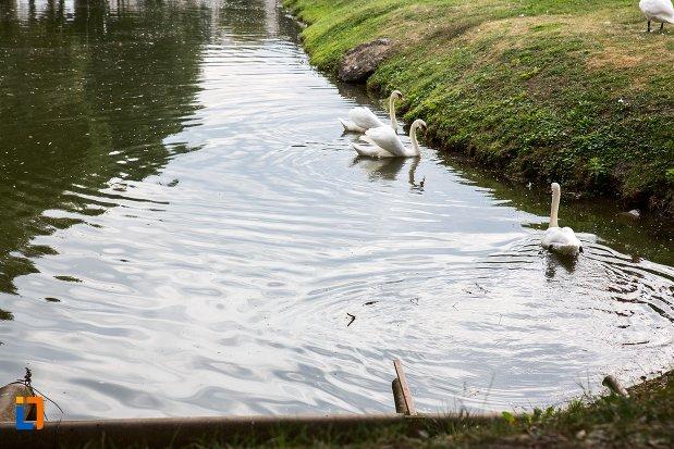 lacul-cu-lebede-cetatea-fagaras-judetul-brasov.jpg