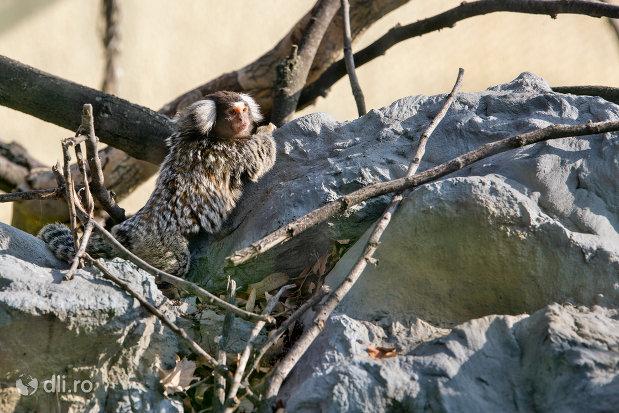 maimuta-din-gradina-zoologica-din-oradea-judetul-bihor.jpg
