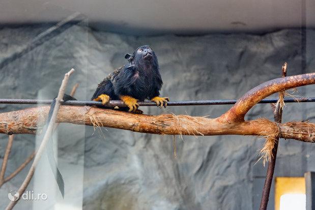 maimuta-exotica-din-gradina-zoologica-din-oradea-judetul-bihor.jpg