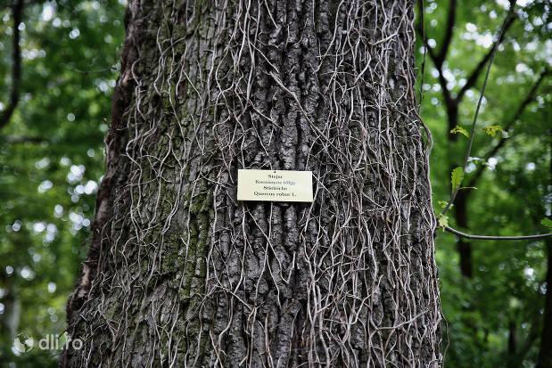 marcare-copaci-parcul-dendrologic-carei.jpg