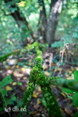 muschi-si-licheni-padurea-noroieni-judetul-satu-mare.jpg