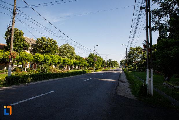 orasul-jimbolia-judetul-timis-sosea-cu-multi-copaci.jpg