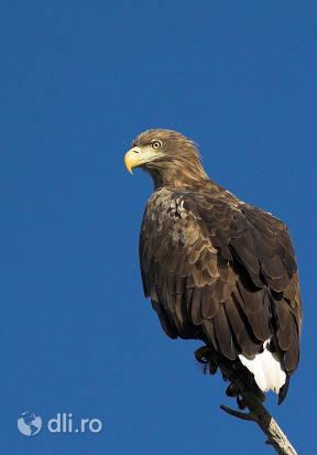 padurea-caraorman-vultur-codalb.jpg
