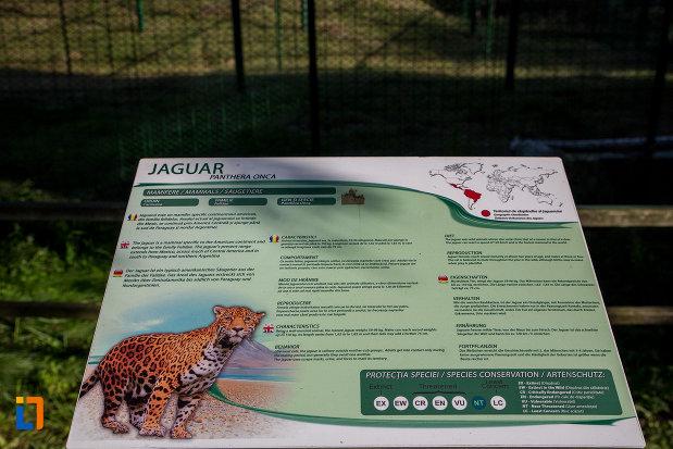 pantera-onca-gradina-zoologica-din-sibiu-judetul-sibiu.jpg