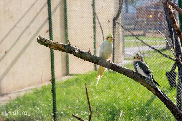 papagali-gradina-zoologica-din-oradea-judetul-bihor.jpg