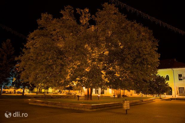 parc-imagine-nocturna-orasul-baia-mare-judetul-maramures.jpg