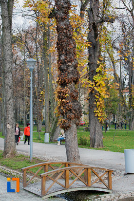 parcul-central-simion-barnitiu-din-cluj-napoca-judetul-cluj.jpg