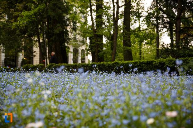 parcul-zavoi-din-ramnicu-valcea-judetul-valcea-flori-de-nu-ma-uita.jpg
