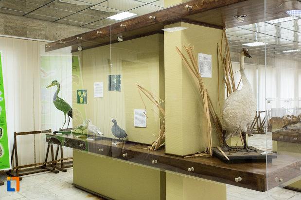 pasari-de-ape-vizibile-la-muzeul-regiunii-portilor-de-fier-din-drobeta-turnu-severin-judetul-mehedinti.jpg