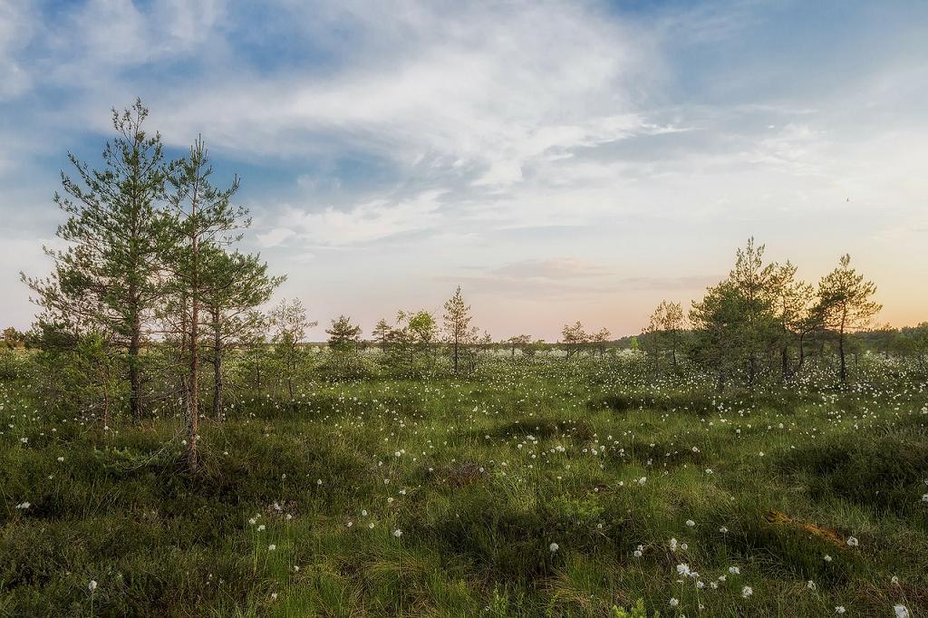 peisaj Estonia