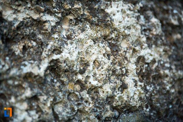 piatra-cu-fosile-asezarea-romana-sucidava-din-corabia-judetul-olt.jpg