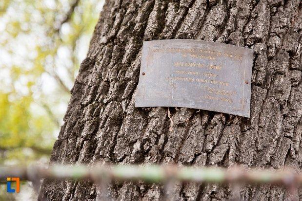 placuta-de-pe-stejarul-unirii-din-ocna-mures-judetul-alba.jpg