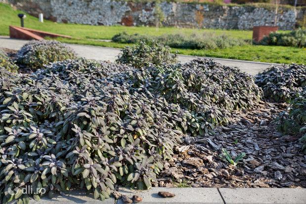 plante-din-parcul-dendrologic-din-oradea-judetul-bihor.jpg