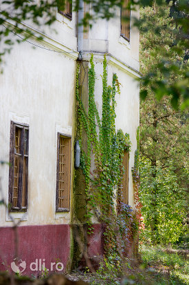 plante-pe-castelul-vecsey-din-livada-judetul-satu-mare.jpg