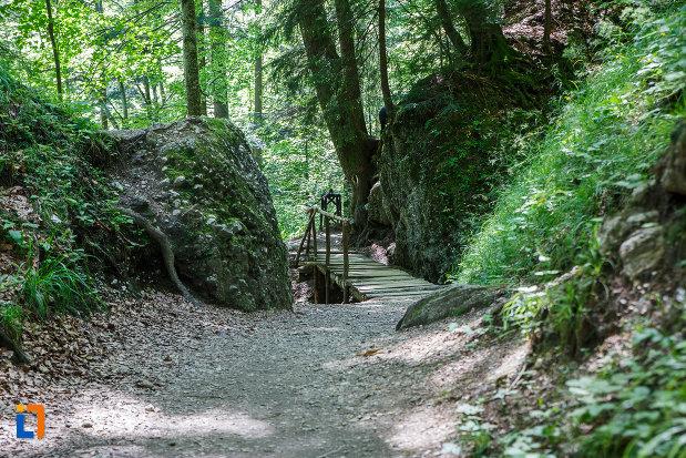 pod-din-lemn-traseul-spre-cascada-urlatoarea-din-busteni-judetul-prahova.jpg