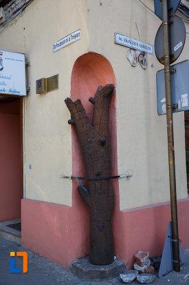 pomul-de-la-casa-cu-pomul-breslelor-din-timisoara-judetul-timis.jpg