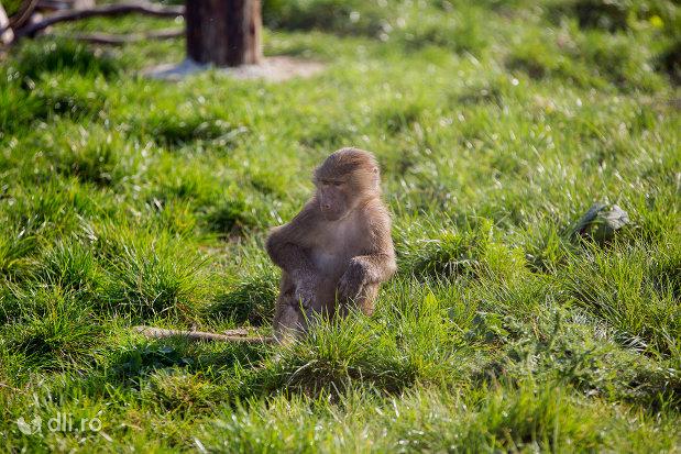 poza-cu-maimuta-gradina-zoologica-din-oradea-judetul-bihor.jpg