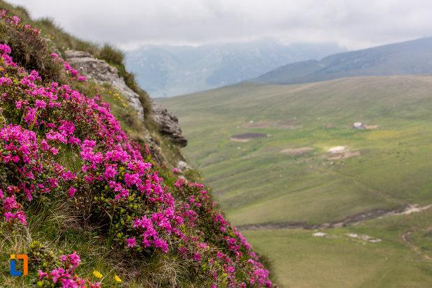 prim-plan-cu-vegetatie-montana-telecabina-din-sinaia-judetul-prahova.jpg
