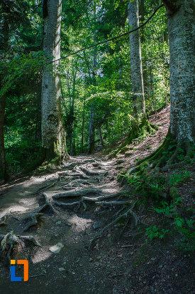 radacini-de-la-arbori-surprinse-in-traseul-spre-cascada-urlatoarea-din-busteni-judetul-prahova.jpg