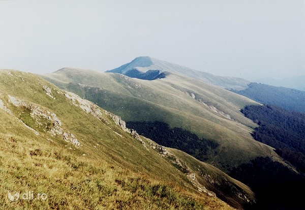 rezervatia-naturala-muntele-oslea.jpg