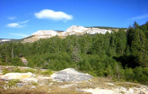 rezervatia-naturala-pietrele-albe.jpg