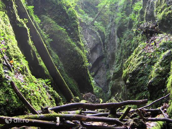 rezervatia-naturala-valea-sighistelului.jpg