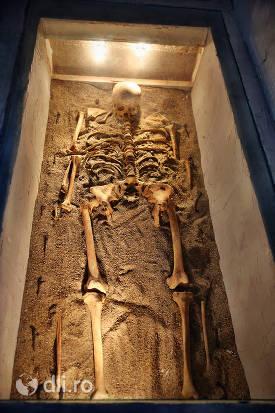 schelet-din-castelul-karolyi-din-carei.jpg