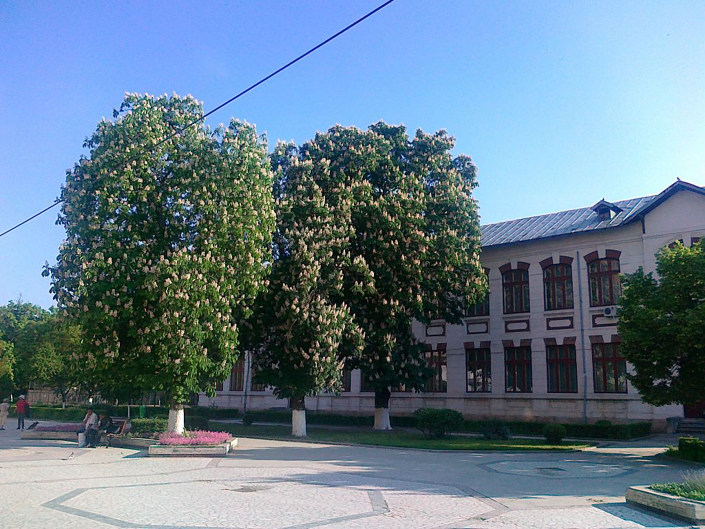 scoala Alexandria