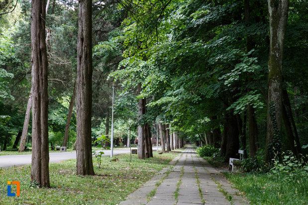 sir-de-copaci-din-aansamblul-de-arhitectura-balneara-din-buzias-judetul-timis.jpg