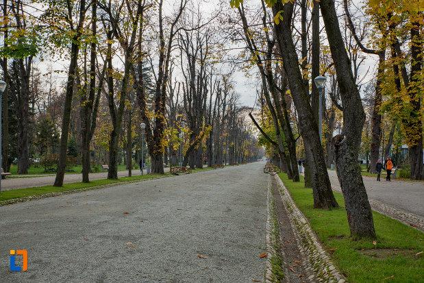 sir-de-copaci-parcul-central-simion-barnitiu-din-cluj-napoca-judetul-cluj.jpg