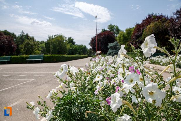 spatiu-cu-flori-si-verdeata-din-parcul-central-din-zimnicea-judetul-teleorman.jpg