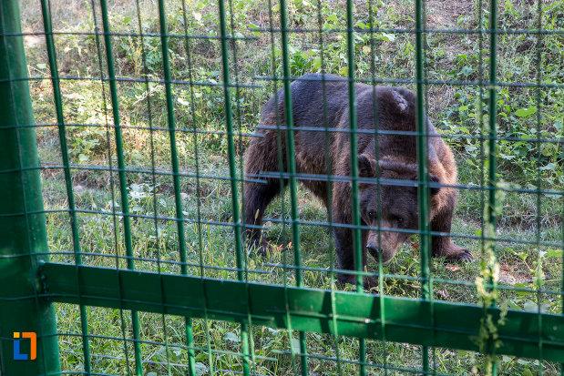 specie-de-urs-gradina-zoologica-din-sibiu-judetul-sibiu.jpg