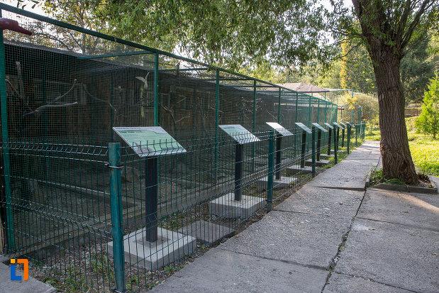 specii-de-papagal-din-gradina-zoologica-din-sibiu-judetul-sibiu.jpg