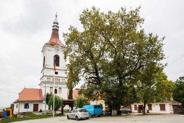 stejarul-din-sacele-plantat-ca-simbol-al-unirii-ardealuiui-judetul-brasov.jpg