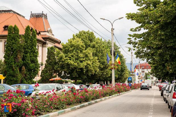 strada-cu-flori-si-copaci-orasul-campulung-muscel-judetul-arges.jpg