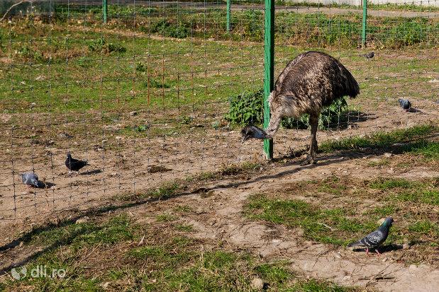 strut-gradina-zoologica-din-oradea-judetul-bihor.jpg