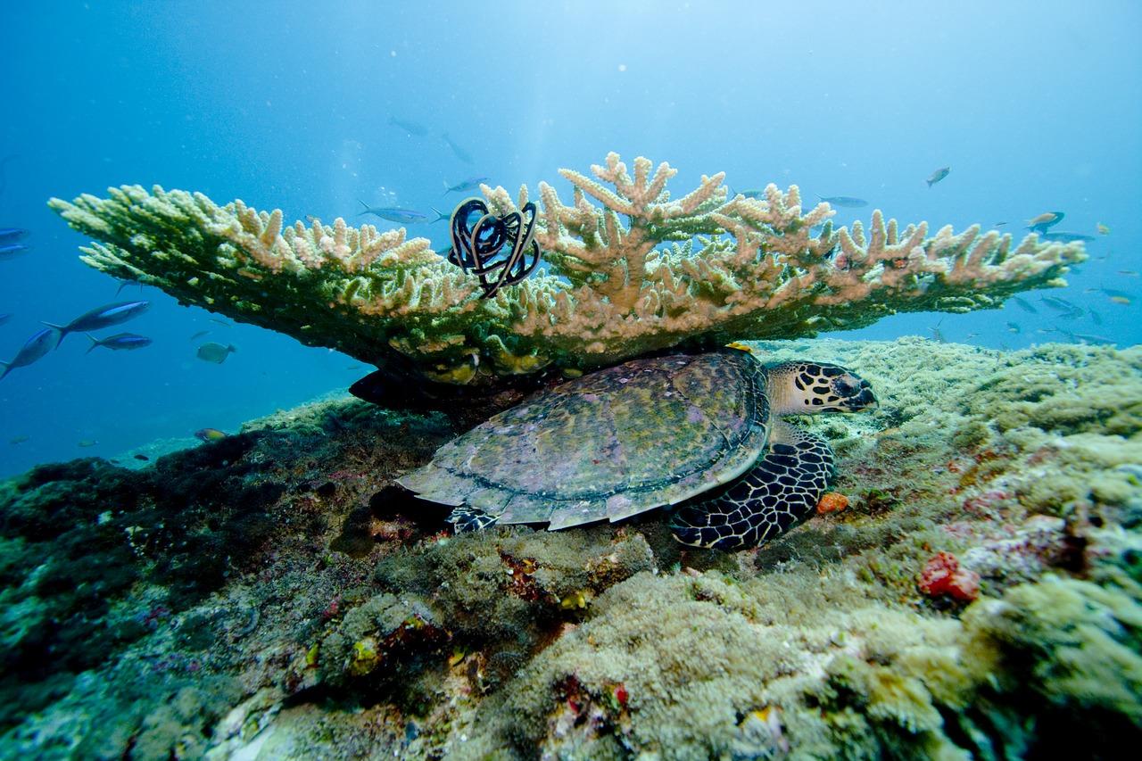 testoasa Maldive