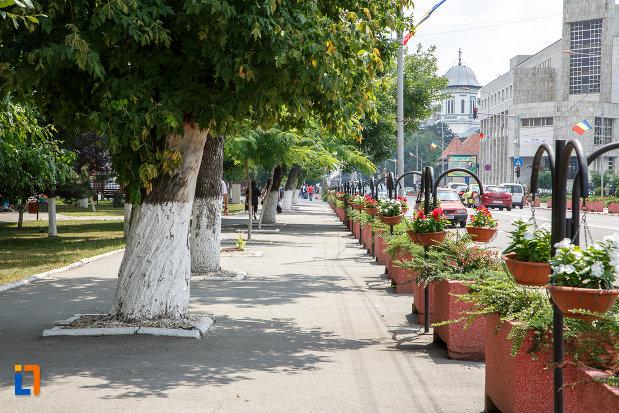 trotuar-cu-copaci-din-orasul-alexandria-judetul-teleorman.jpg