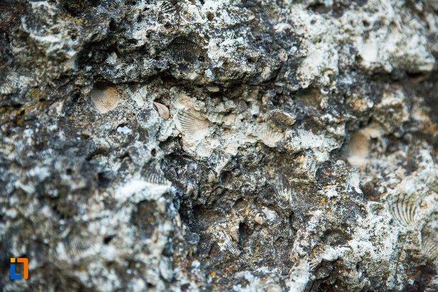 urme-de-cochilii-asezarea-romana-sucidava-din-corabia-judetul-olt.jpg