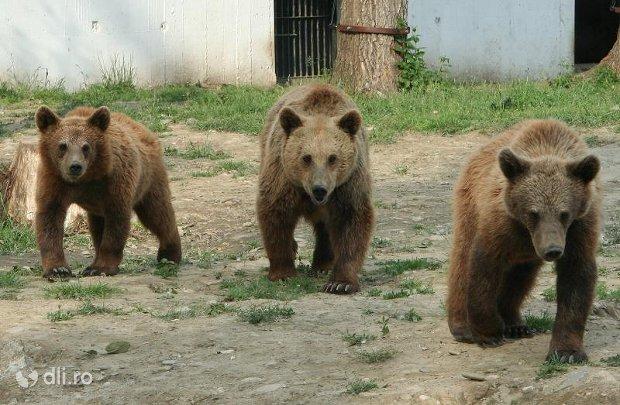 ursi-gradina-zoologica-targoviste.jpg