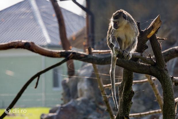 vedere-cu-maimuta-gradina-zoologica-din-oradea-judetul-bihor.jpg